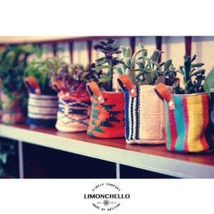 Limonchello_1