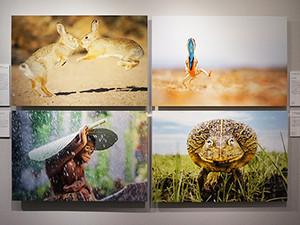 Naturesbestphotography_3