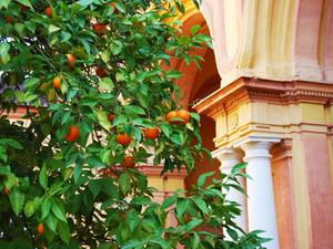 Naranjas_en_sevilla