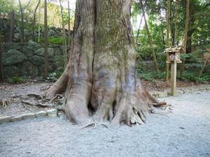 Naiku_trees