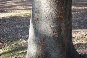 Wood_in_winter