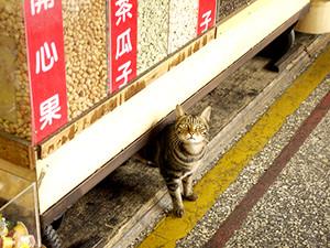 Cat_in_dihua_street